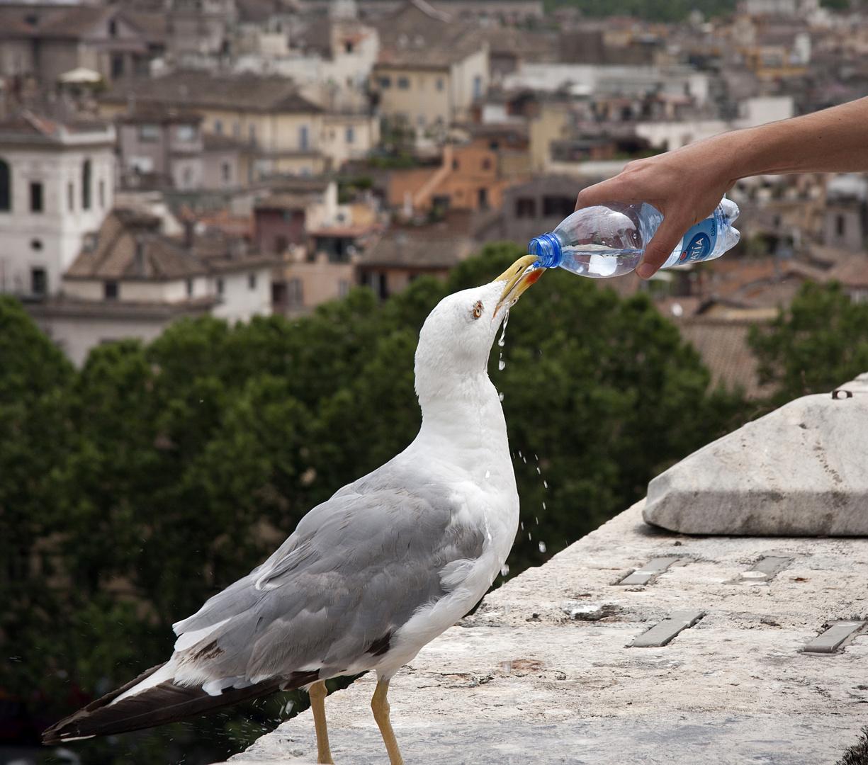 Dar da bere agli assetati (dar de beber al sediento)