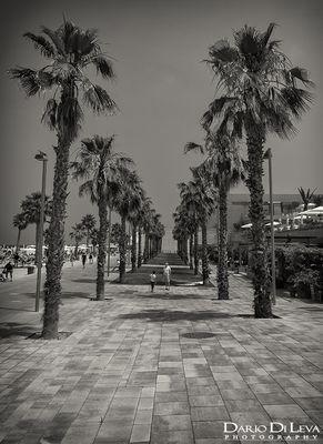 Dario Di Leva - Photography