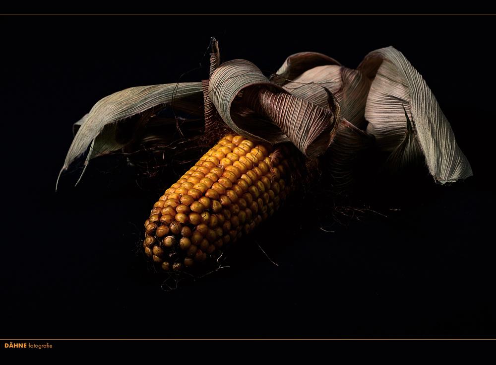 dark corn....oder auch, der Sommer neigt sich dem Ende zu