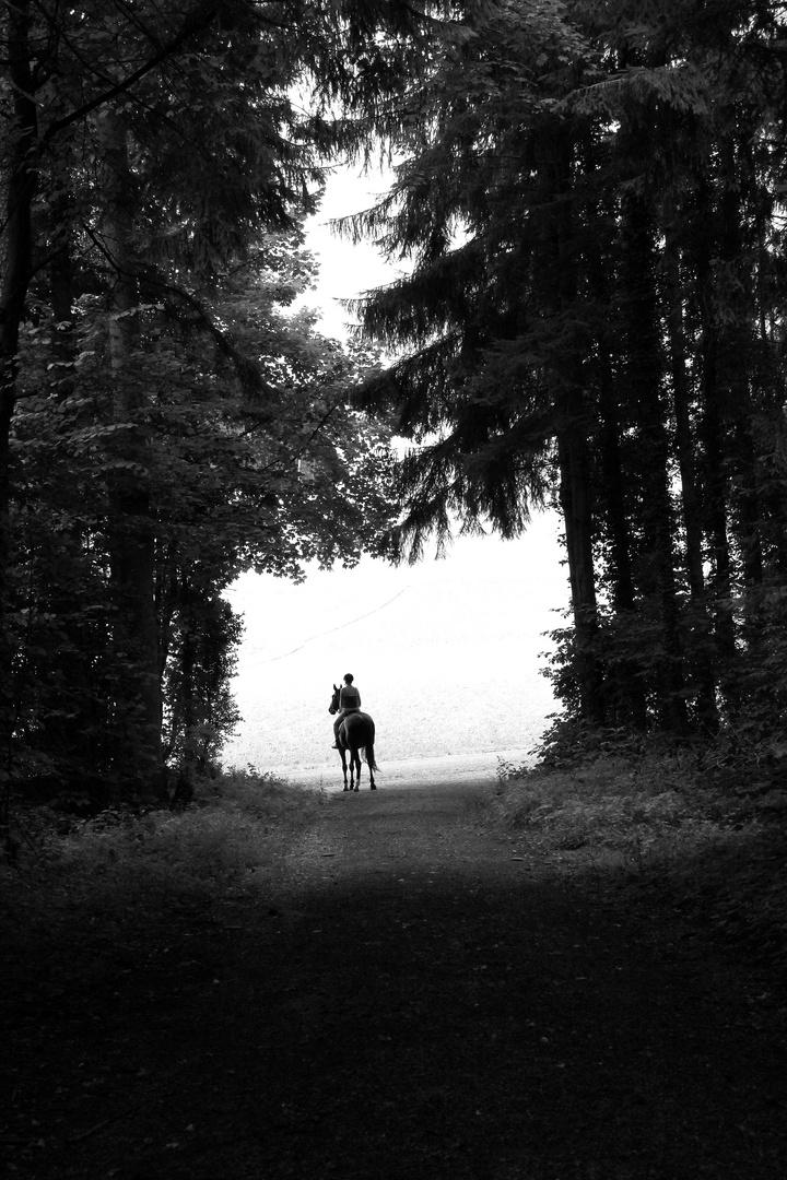 dark, dark forest.