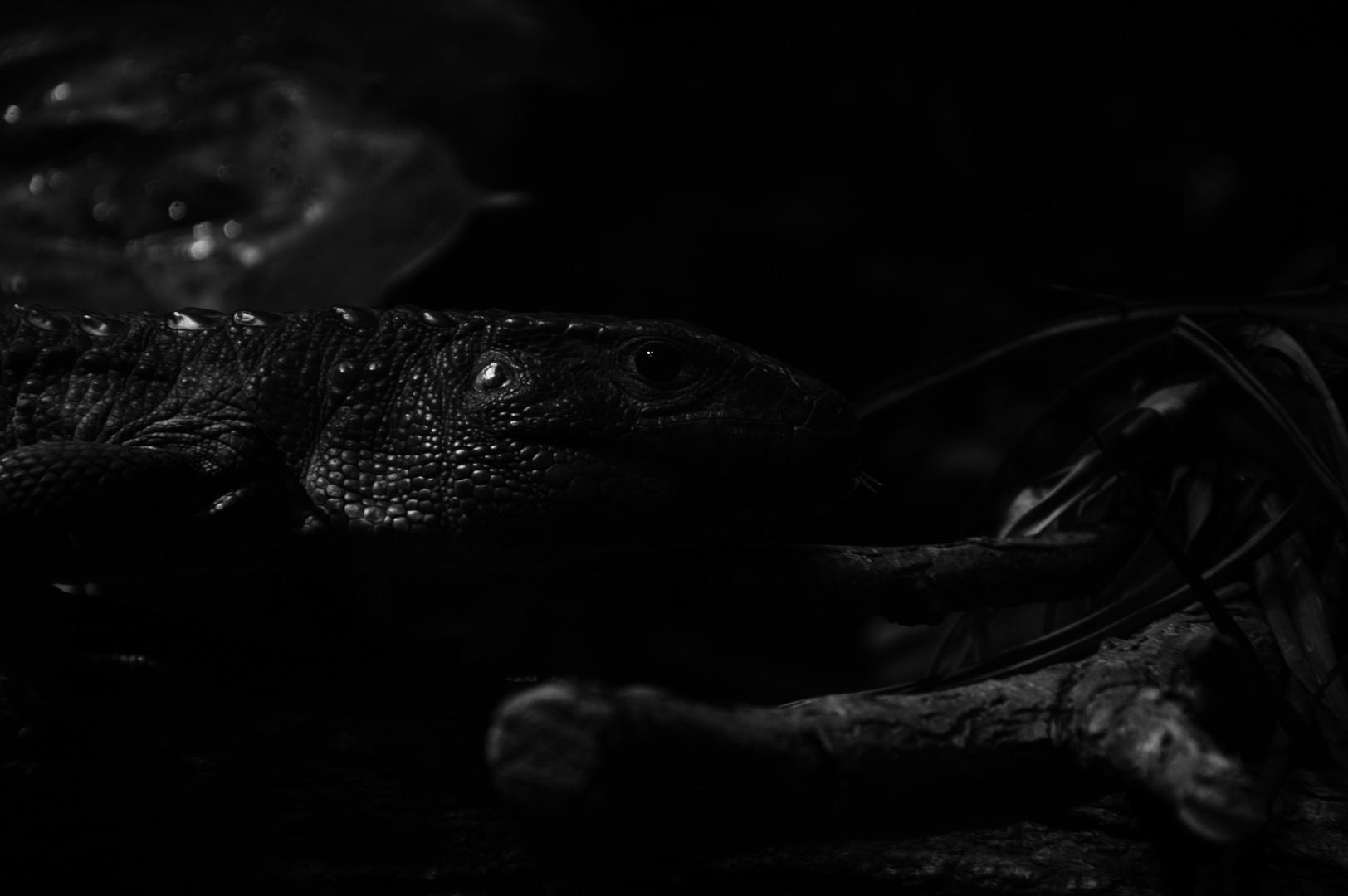 Dark Echse