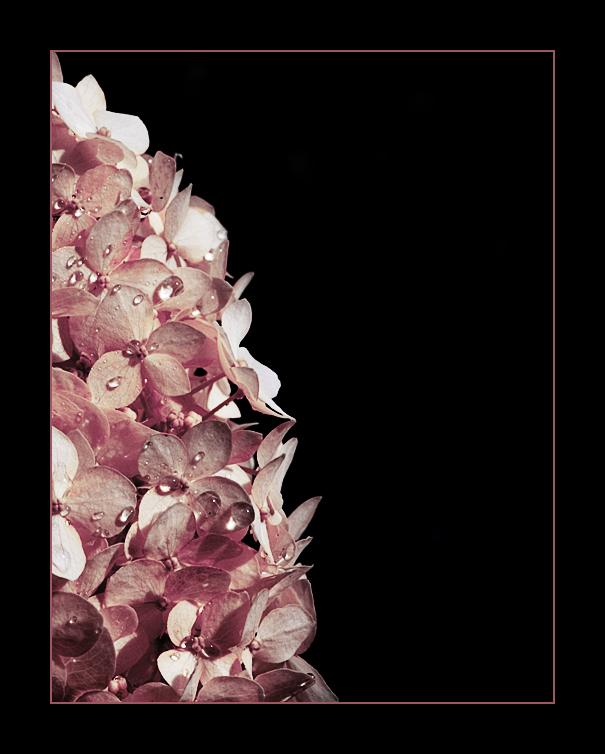 dark flower - pink