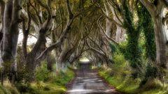 Dark Hedges - Bregagh Road / Nordirland