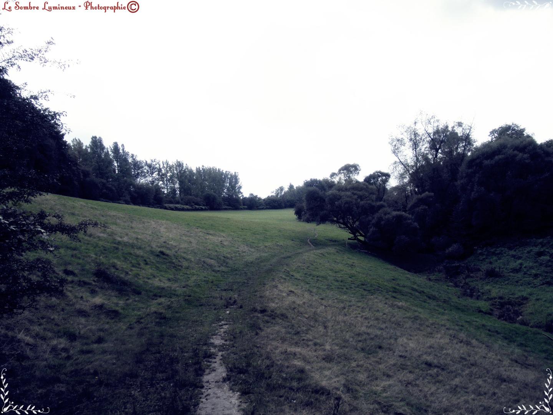 Dark Meadow-Way