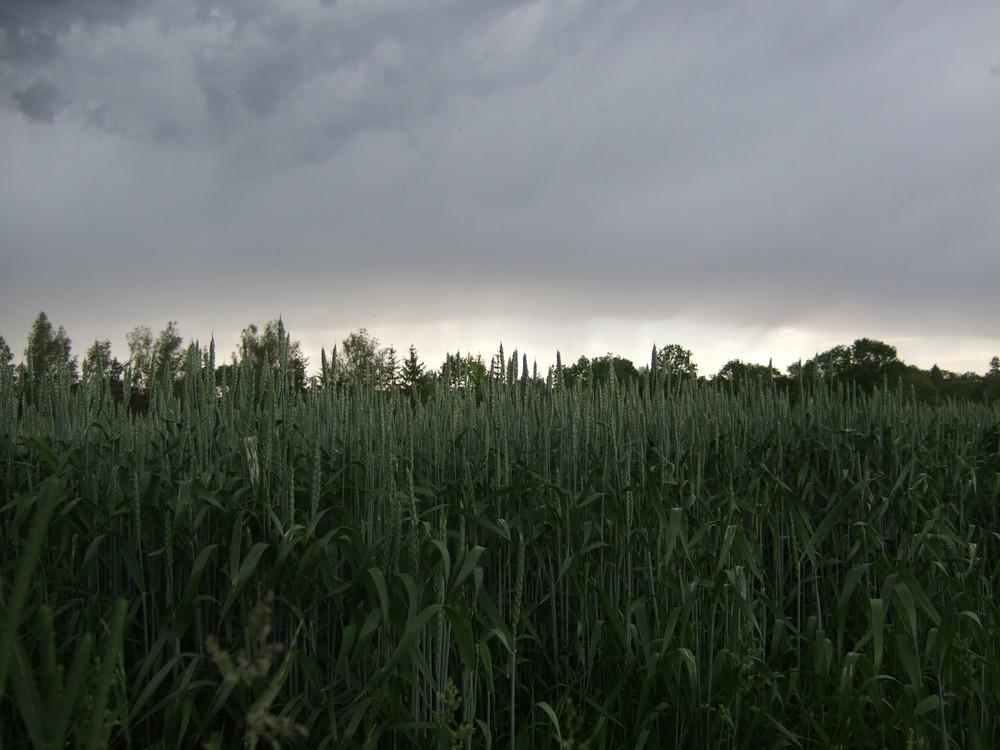 Dark rain is coming