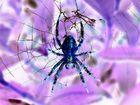 Dark Spider