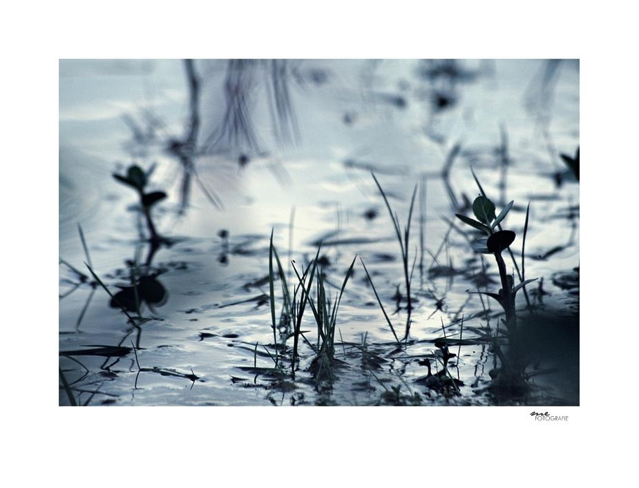 .dark water.