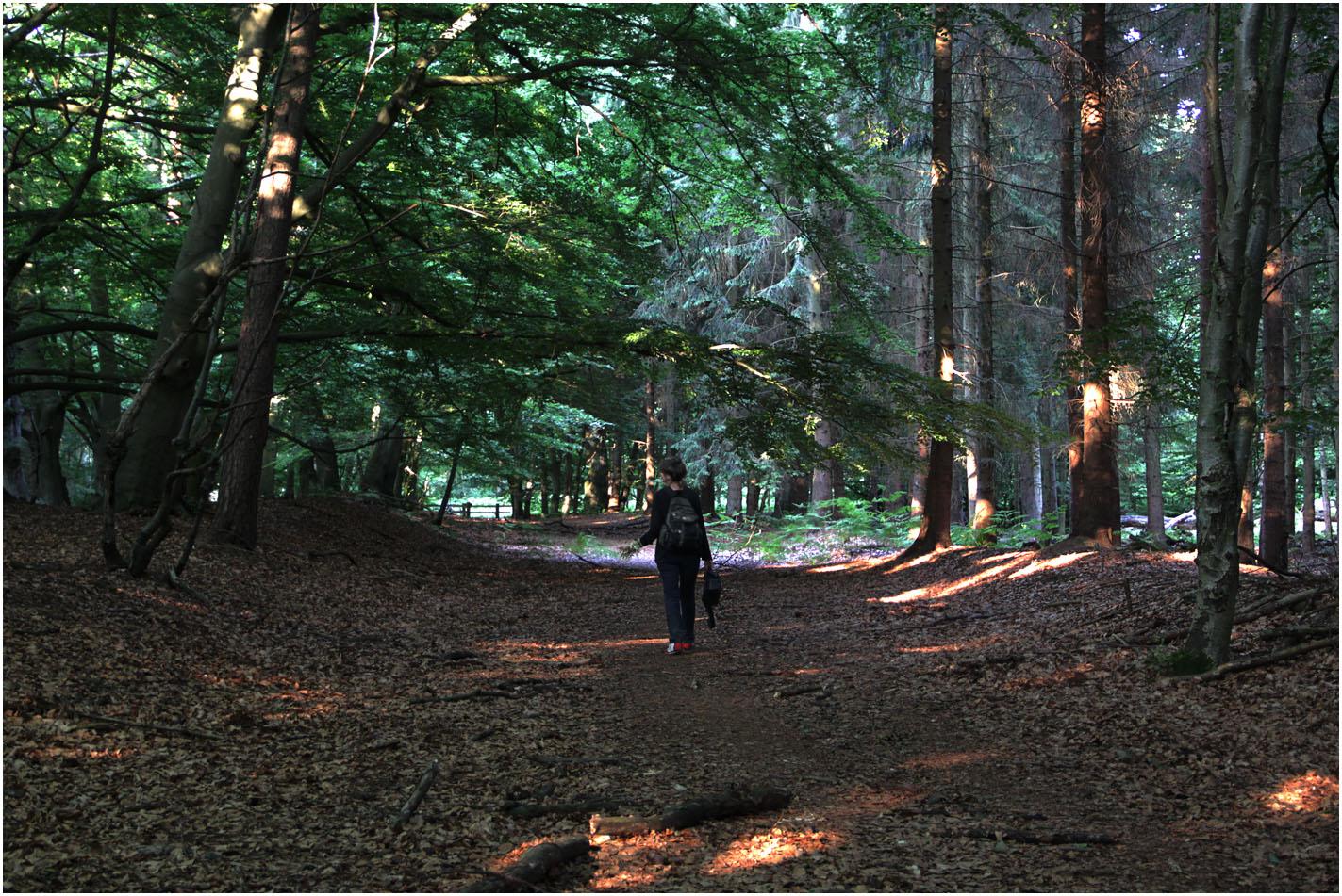 Darßer Urwald (17)