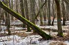 Darßer Wald 3