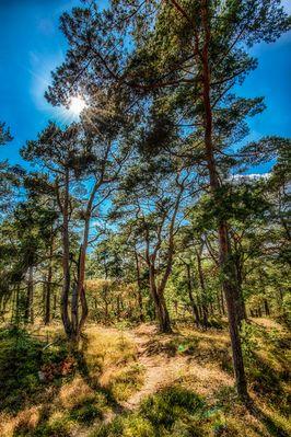 Darßer Wald...#01