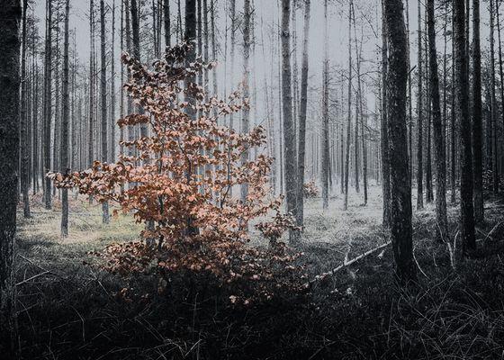 Darsswald im Winter