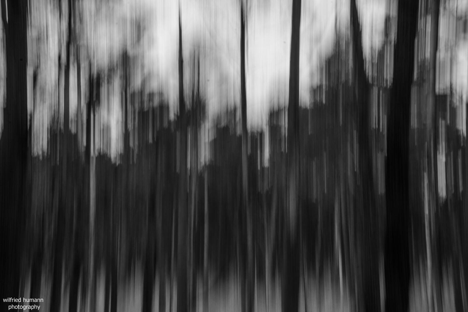 Darßwald in motion