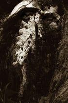 Darth Tree