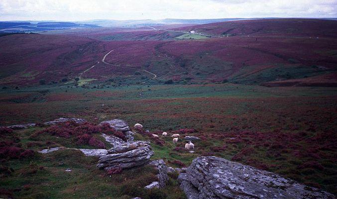Dartmoor (England)