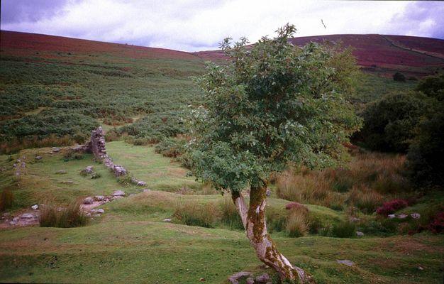 Dartmoor (England) II