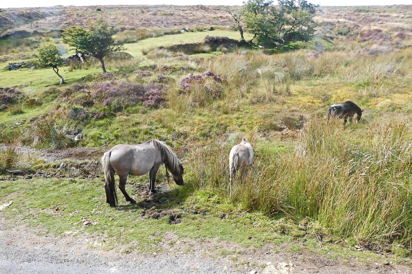 Dartmoor Nationalpark