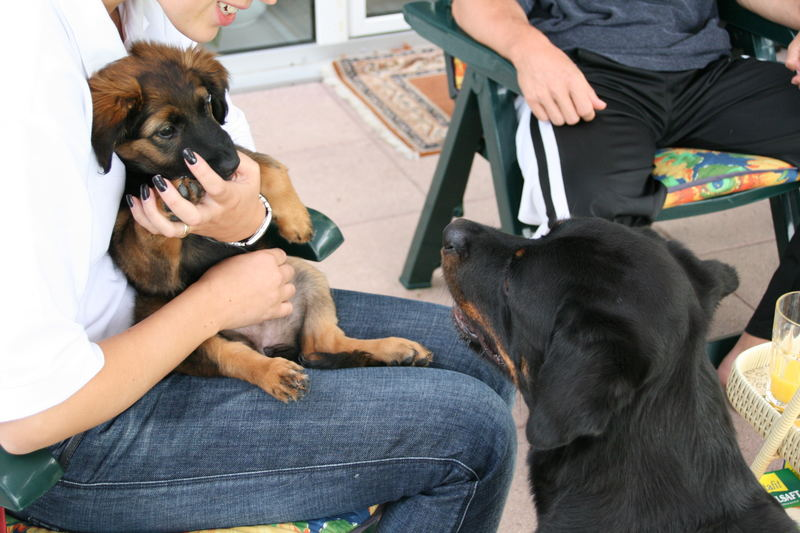 Das 1. mal mit einem anderen Hund, ohweia, Hilfe
