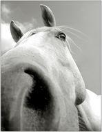 Das 28mm Pferd