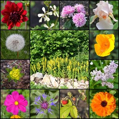 das Alles (und noch viel mehr) wächst in meinem Garten