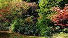 Das alljährliche Garten - Herbstblätter - Aufsammeln ...