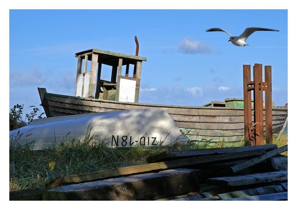 Das alte Boot und die Möwe