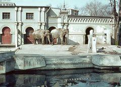 Das alte Elefantenhaus im Kölner Zoo - im Jahr 1964