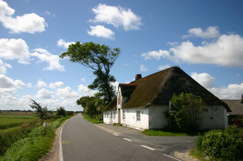 Das alte Friesenhaus und der windgepeitschte Baum