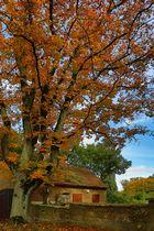 das alte leichenhaus