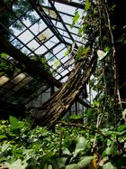 Das alte verlassene Gewächshaus, das noch Leben in sich hat.