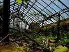Das alte verlassene Gewächshaus, der Dschungel