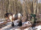 Das Arbeitspferd im Wald, Rückepferd