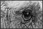 Das Auge _ 3S52262