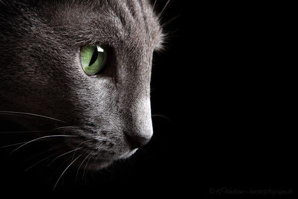 ... das Auge ...
