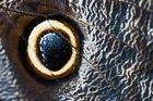 Das Auge .....