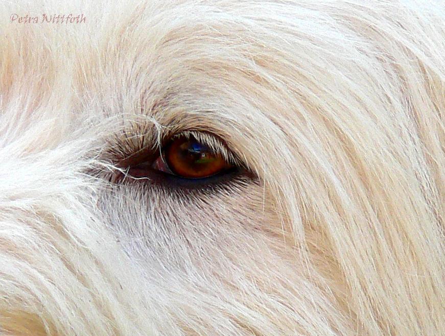 Das Auge ....
