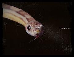 Das Auge der Schlange