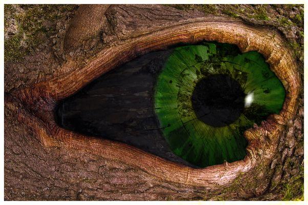 das Auge des Baumes 3