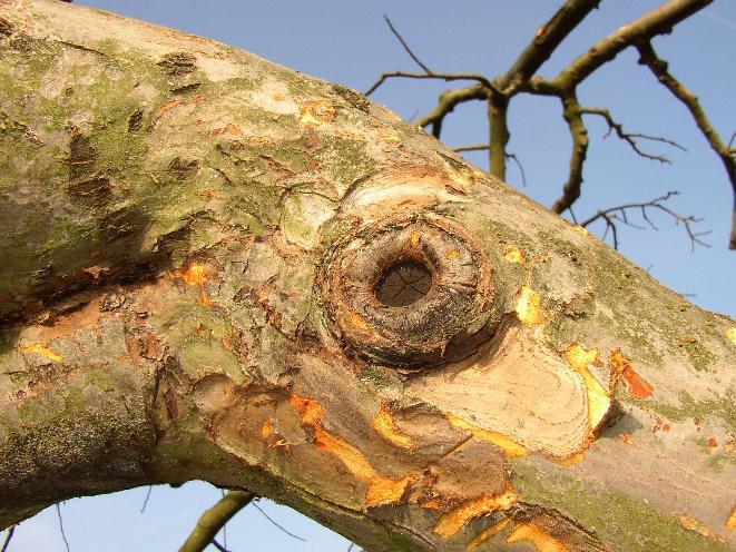 Das Auge des Baumes