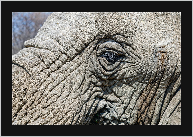 Das Auge des Elefanten!