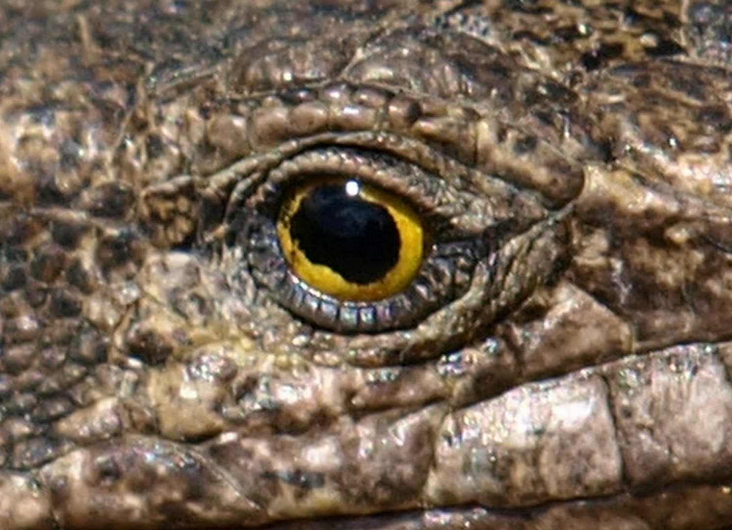 Das Auge des Monsters