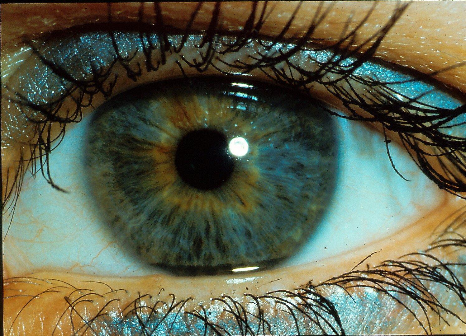 Das Auge im focus