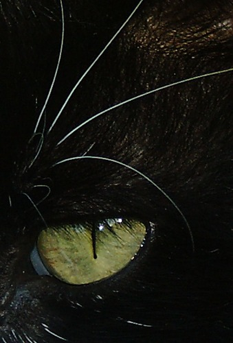 Das Auge meines Tiegers