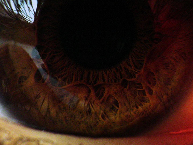Das Auge [SUPER Makro]