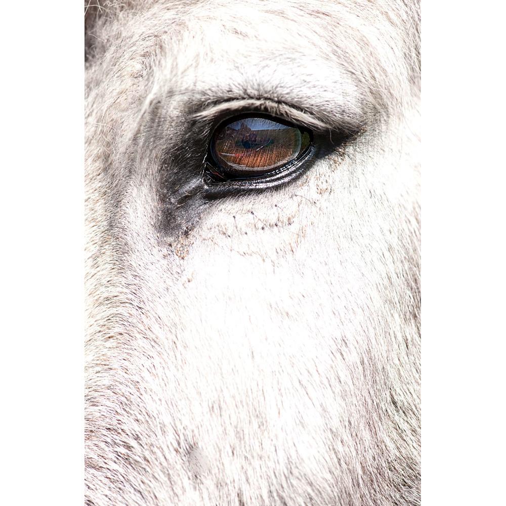 Das Auge von Jasper