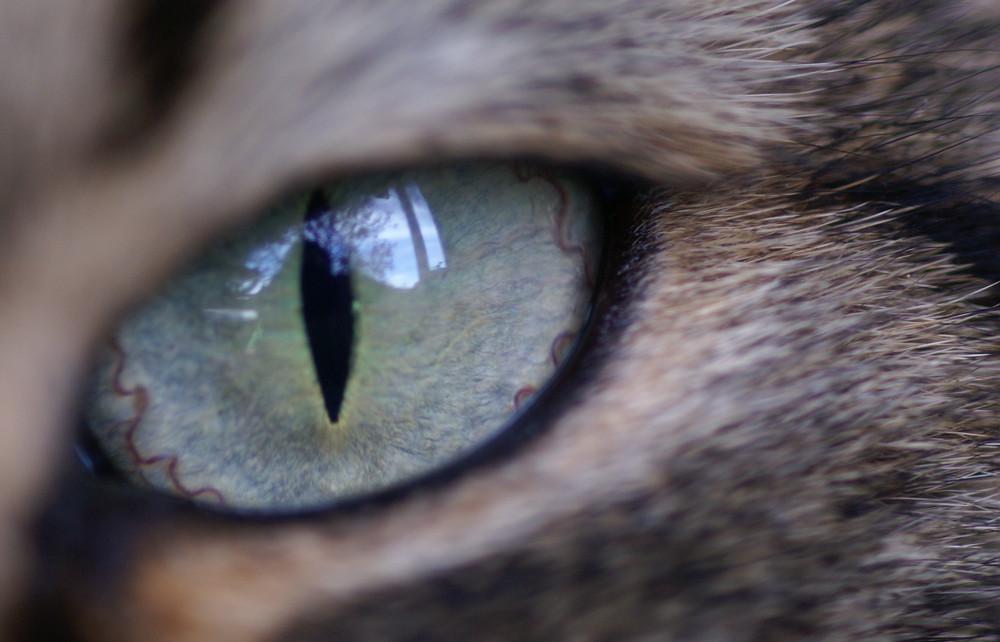 Das Auge von Picolo