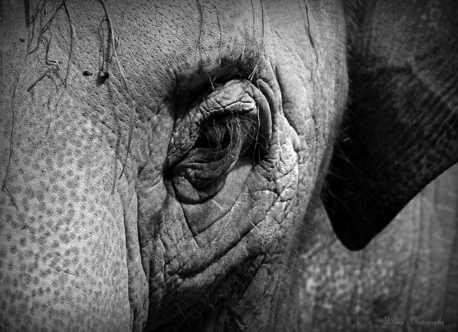 das Auge...die Tür zur Seele bei Mensch und Tier