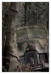 Das Auto im Wald