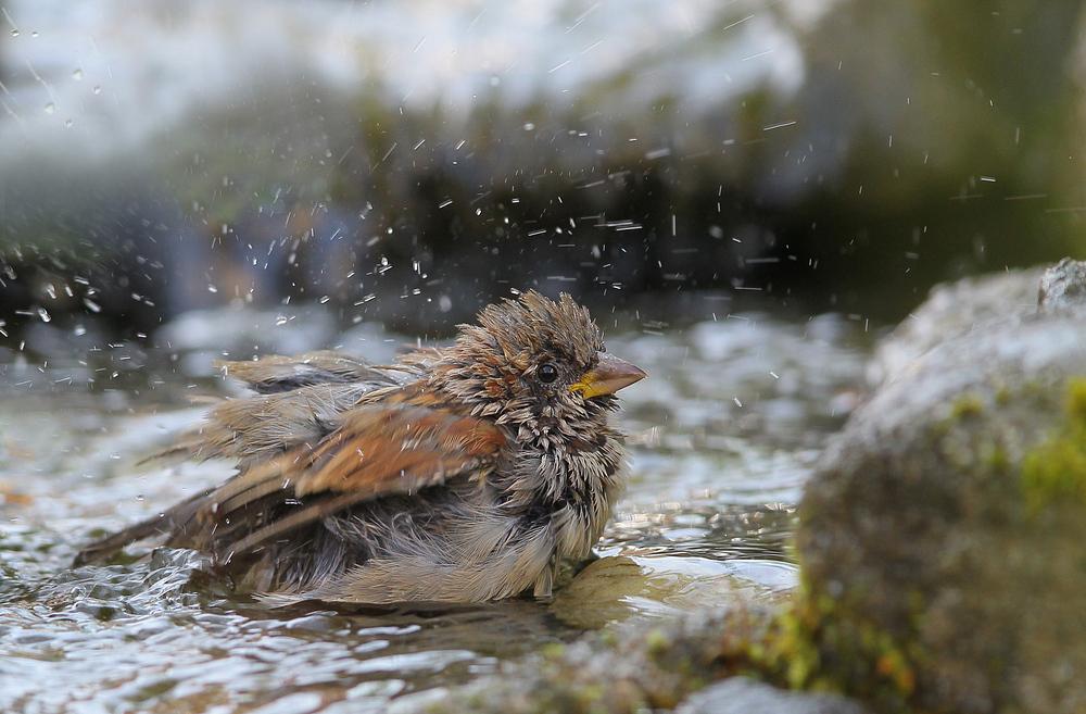 Das Bad.......