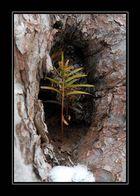 Das Bäumchen im Baum, oder was soll das sein?