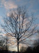 Das Baum